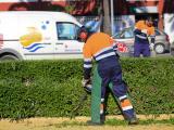 Trabajos de poda en El Palomar. (Foto: Nicolás G. Becerra)